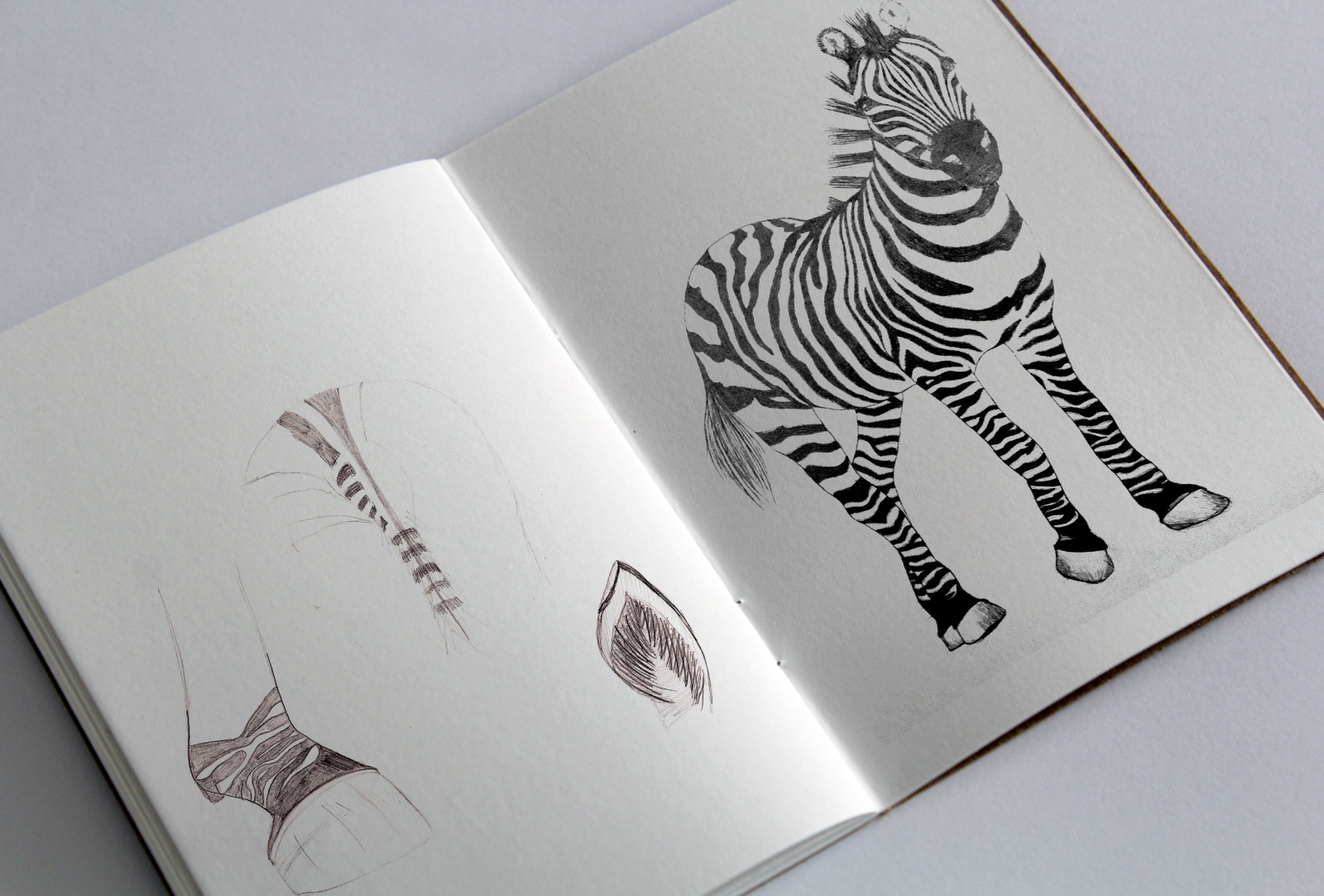sketchbook_Zebra